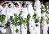 مقبرة الزهور